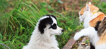 Jornadas de Esterilización canina y felina Bogotá Sur Occidente IDPYBA