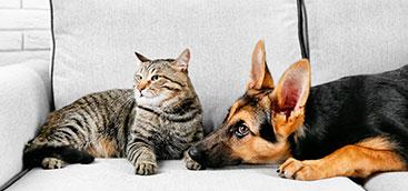 Jornadas de Esterilización canina y felina Bogotá SUR IDPYBA