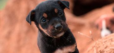 Jornada de Adopción día del Perro