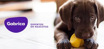 """Parvovirus Canino """"El Modelo Veterinario del Paciente Séptico"""""""